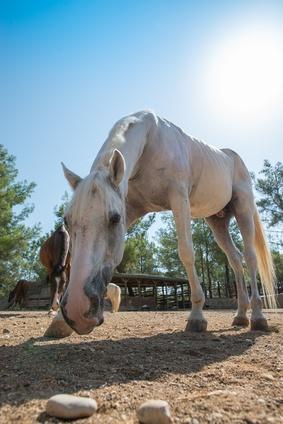 Pferdehaltung aus Tierschutzsicht