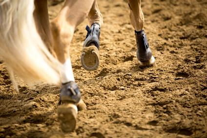 Pferderecht NRW
