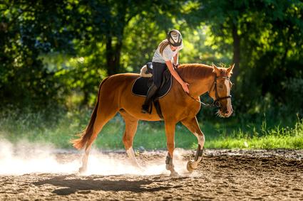 Anwalt für Pferderecht Düsseldorf