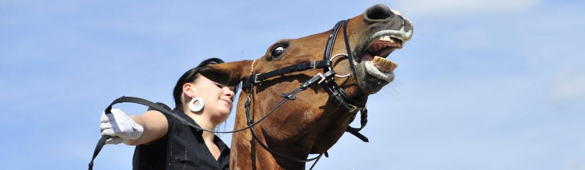 Durchgehende Pferde – Haftungsansprüche gegen den Hundehalter?