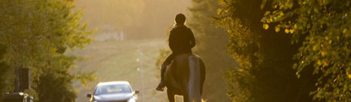 Unfall mit Pony im Straßenverkehr –  Hälftige Haftung