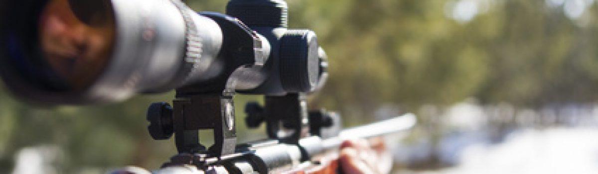 Jäger verliert Jagdschein nach tödlichem Schuss auf ein Pferd