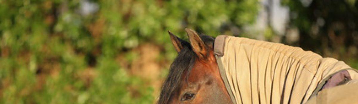 Haftung beim Pferdekauf – Vorliegen eines Sommerekzems