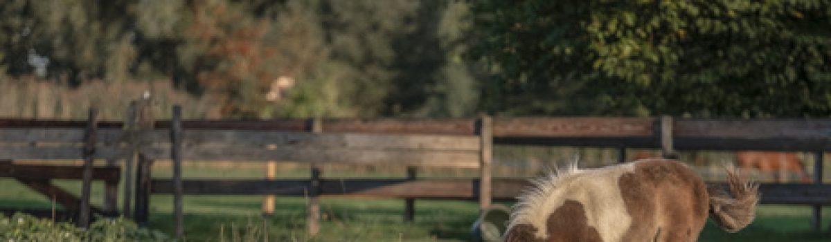 Anwaltsregress – Zur Wirksamkeit einer Vertragsstrafenklausel im Pferderecht