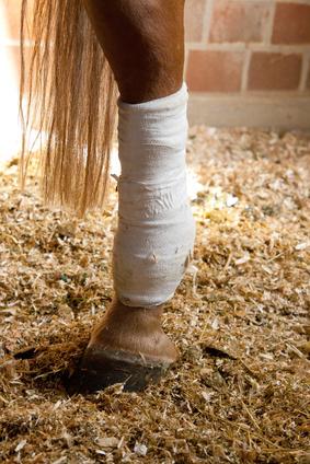 Gewährleistungsrechte Pferdekäufer