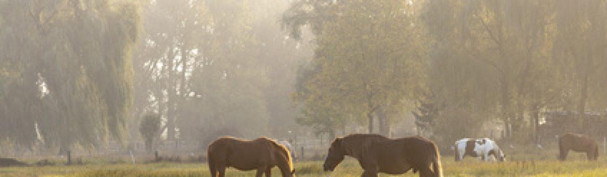 Rückabwicklung des Pferdekaufvertrages – Mangelgewährleistungsanspruch beim Pferdekauf