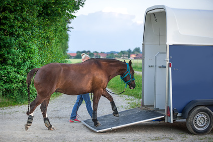 Haftung Pferd