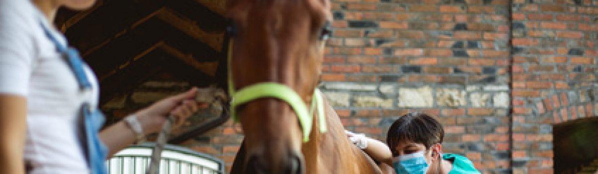 Rücktrittsrecht der Pferdekäuferin – Wie lange kann ich nach der Ankaufsuntersuchung vom Pferdekaufvertrag zurücktreten?