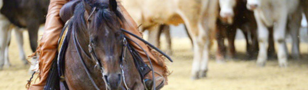 Rückabwicklung eines Pferdekaufvertrages über ein Western-Reitpferd wegen PSSM (Polysaccharid-Speicher-Myopathie)?
