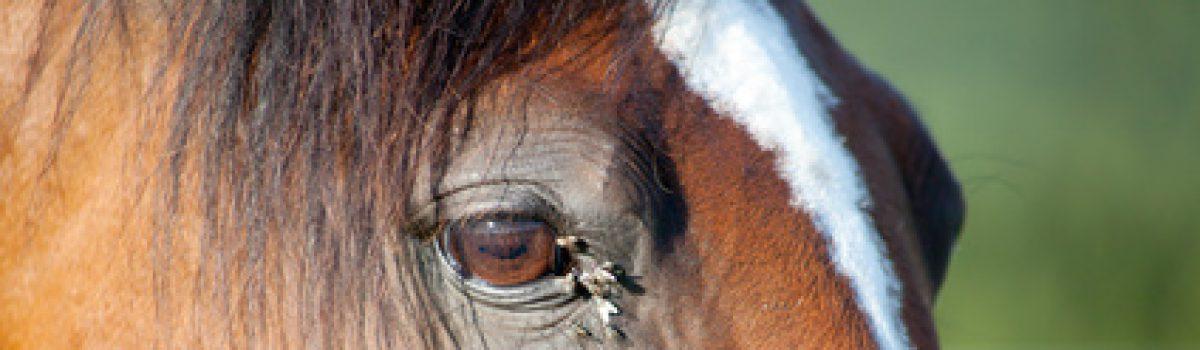 Selbstvornahme beim Kauf eines kranken Pferdes