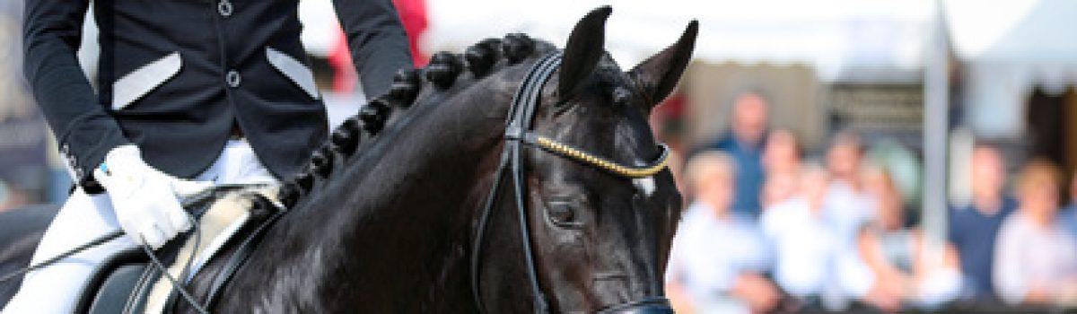 Beschaffenheitsvereinbarung Ausbildungsstand, Rückgabe Pferd