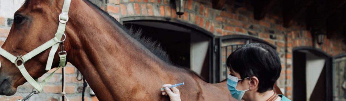 Rückgabe Pferd wegen Vor – Operation