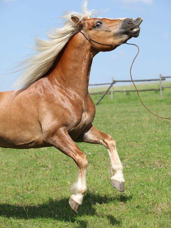 Urteil nach Pferdesturz