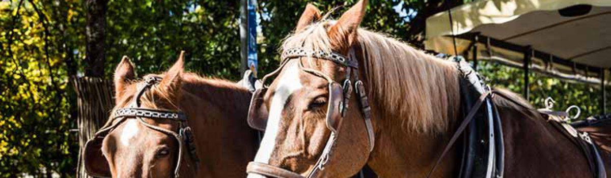 Schreckreaktion von Pferden?  Verwirklicht die physische Anwesenheit eines Hundes in einiger Entfernung zu einem Pferd (hier Kutsche) bereits die Tiergefahr?